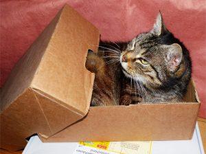 A cat in a small half-open cardboard box.
