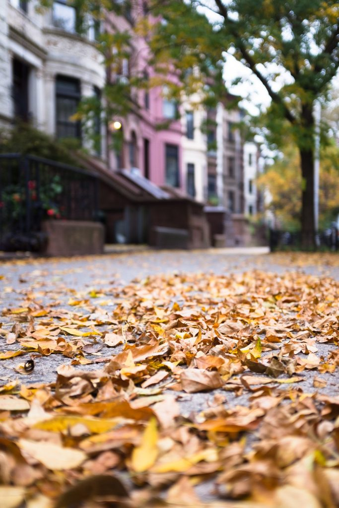 A close-up view of a pavement covered with autumn leafs in Park Slope, one of the best Brooklyn neighborhoods for families.