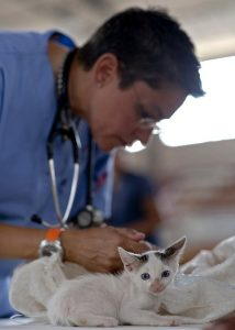 A vet checking a kitten when moving with pets.