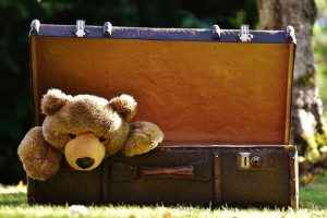 teddy in the luggage
