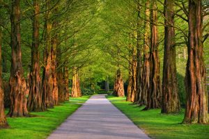 A lane in a park lined with trees.