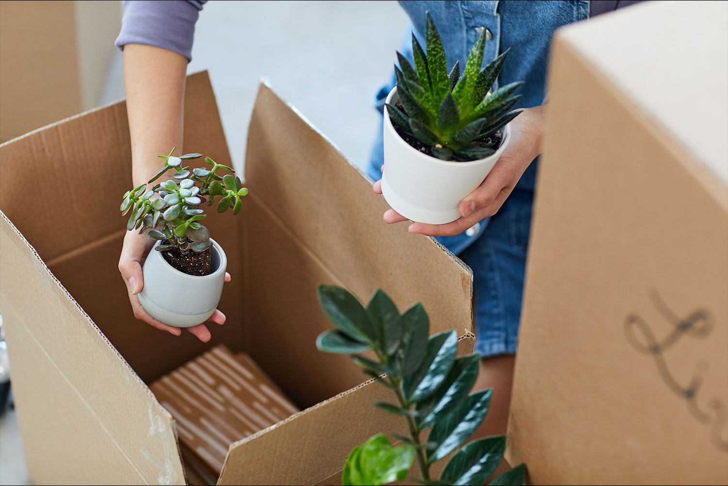 Packing Plants for Moving