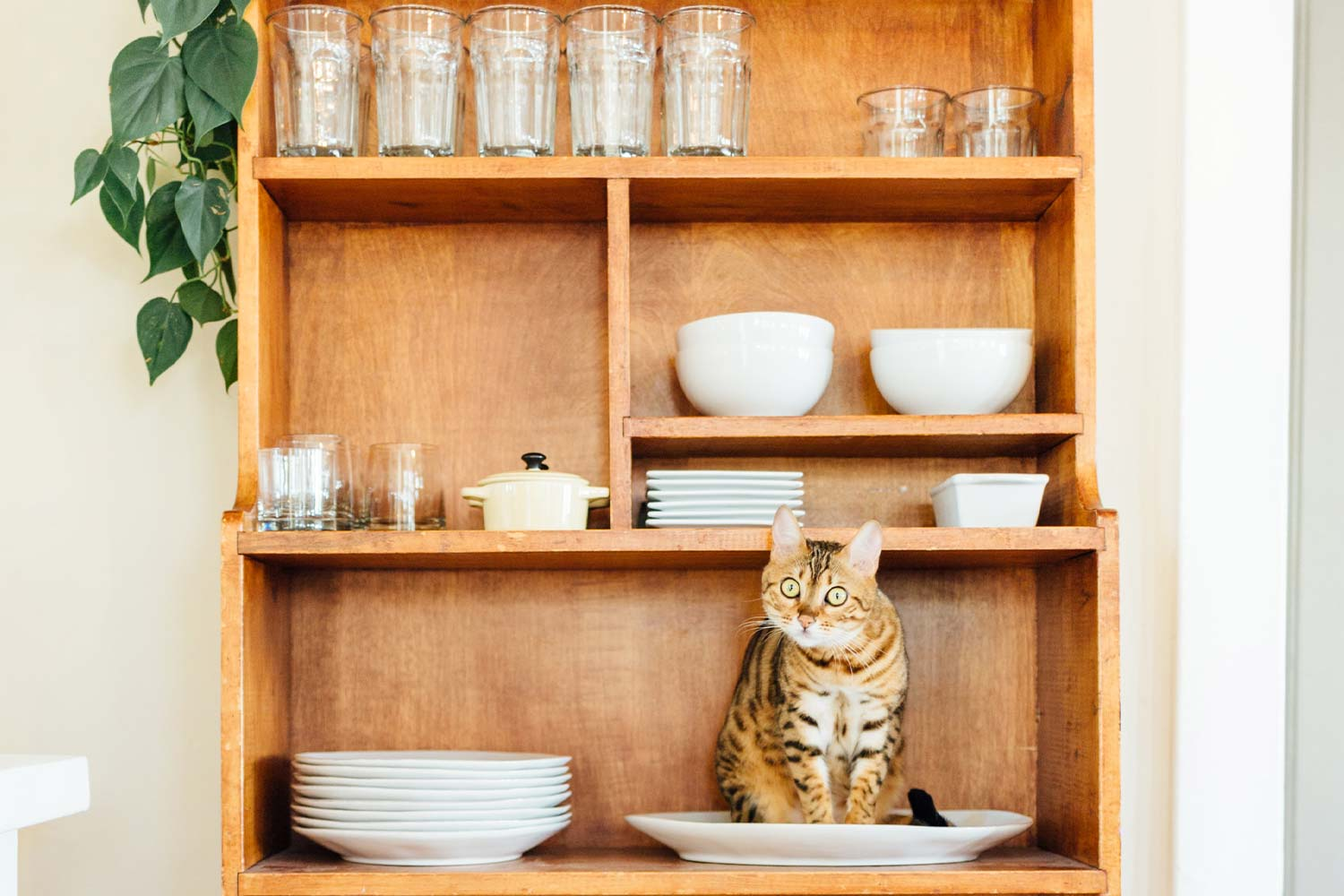 How to Pack Glassware and Fine China for Your Move